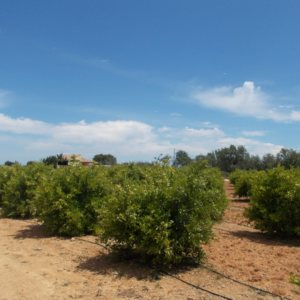 PL07  Building plot of land for sale in Ondara, Alicante, Spain
