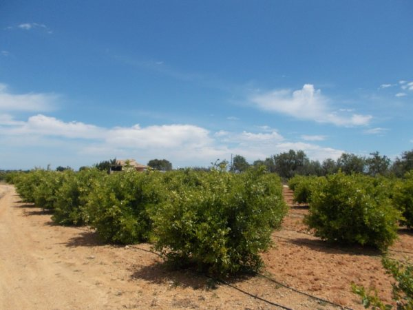 PL07  Building plot of land for sale in Ondara, Alicante, Spain - Photo